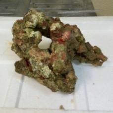 Живой рифовый камень